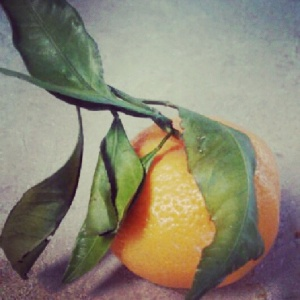 Lunch (part 2): fresh Satsuma tangerine.