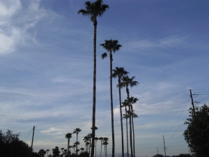 You can't tell me this doesn't look beautiful.