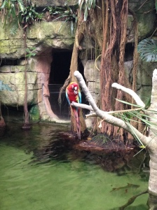 They had the most colorful parrots at the Moody Gardens rainforest.