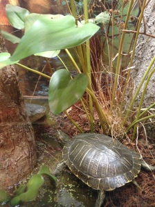 Doesn't this look so real? It was actual a fake turtle in an exhibit at a national park visitor center.