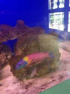 Really colorful fish.
